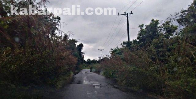 Astaga! Jalan Provinsi ini di Selimuti Semak Belukar