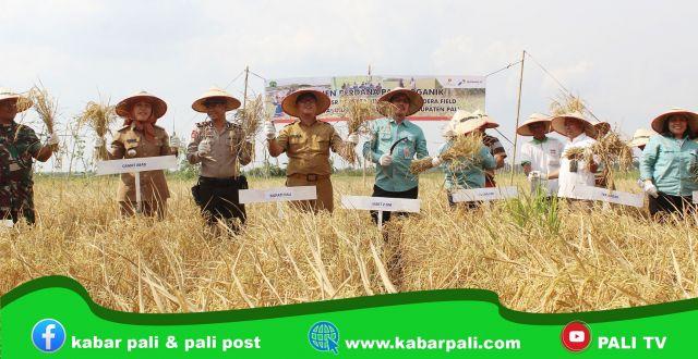 Panen Perdana Padi Organik, Adera Field Optimalkan Hasil Pertanian Rakyat