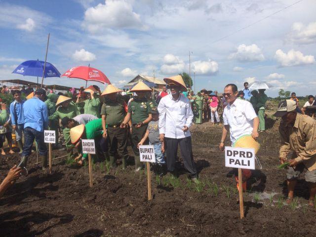 Ingin Jadi Lumbung Pangan, PALI Buka 1000 Hektar Lahan Sawah Baru